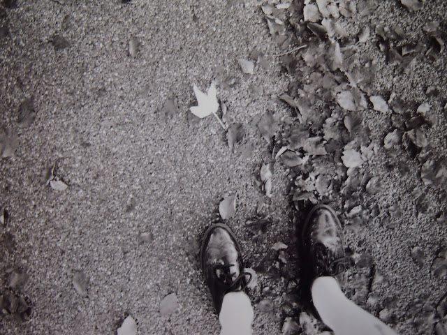 PB121567 Analogue Autumn