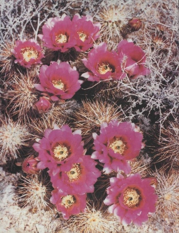 d15b5027-a8e6-4479-8c04-06557b5f2375_zps532c0638 Hiding Behind Flowers
