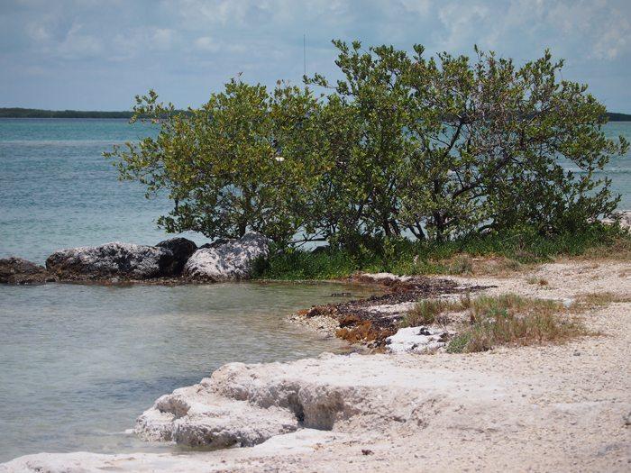 P7161454 Key Biscayne and Key West