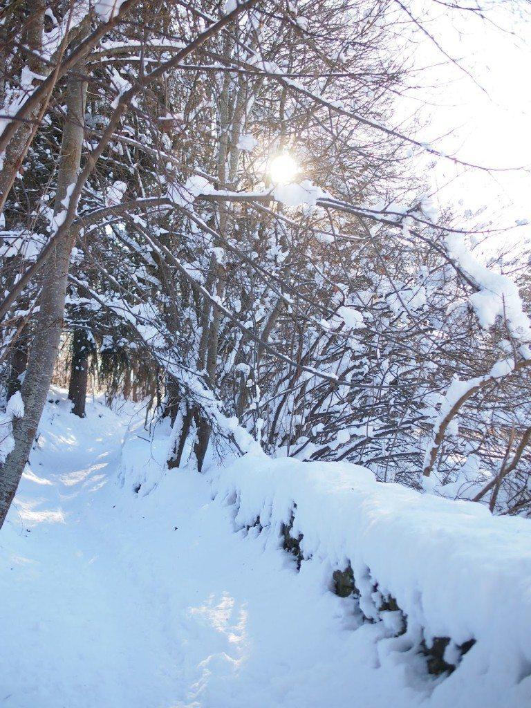 P1015555-768x1024 Snow Bunnies