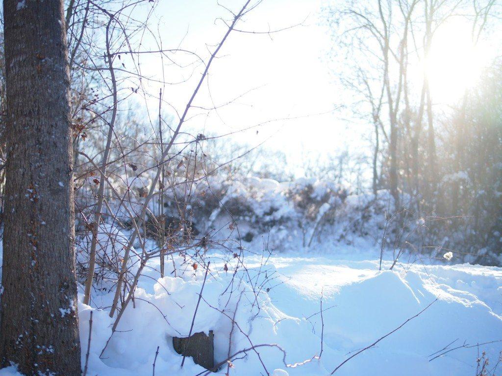 P1015571-1024x768 Snow Bunnies