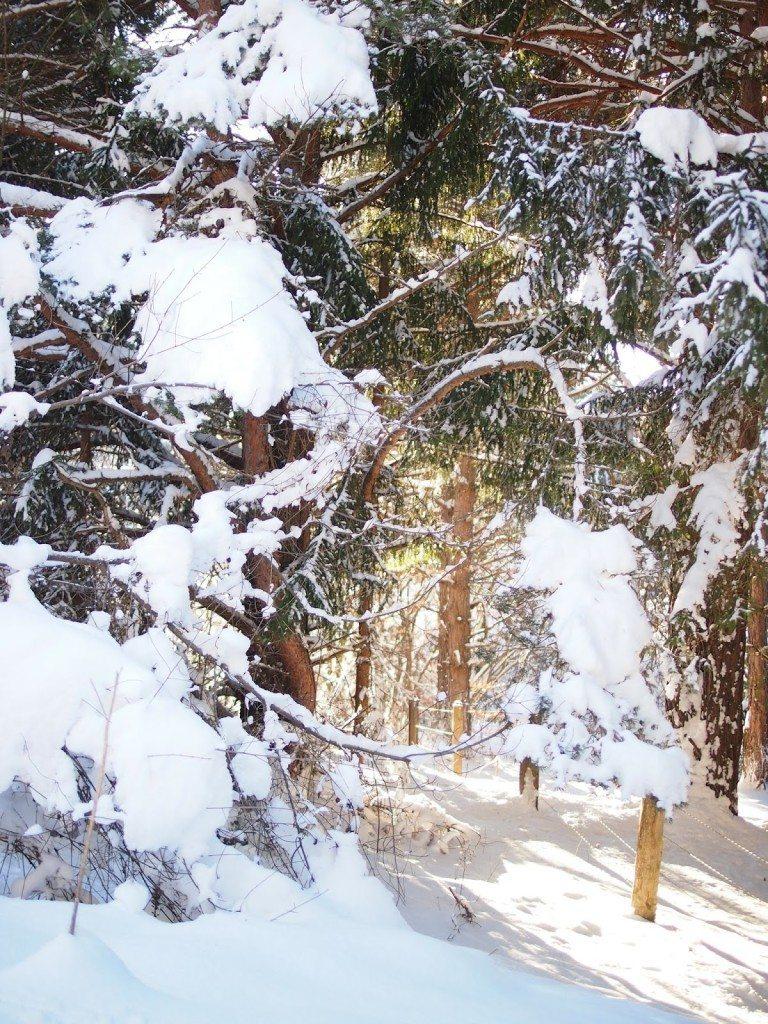 P1015602-768x1024 Snow Bunnies